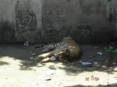 globalvoices:  The sorry state of Manila Zoo caused a stir among Filipino netizens after photos like this were posted online. Image: Nix de Pano on LiveJournal