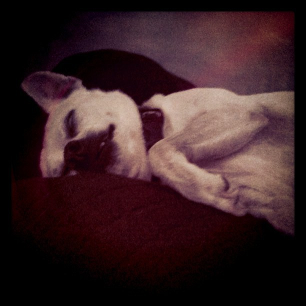 Sleepy face (Taken with instagram)