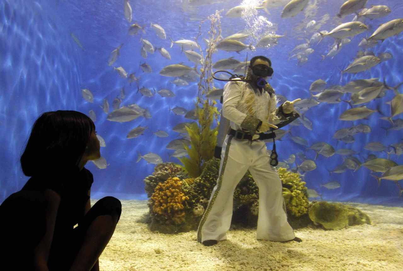 Photos of the dayA visitor watches as a diver wearing Elvis Presley attire poses inside the Ocean Park aquarium in Manila. Aug. 15, 2011. Presley died at the age of 42 on Aug. 16, 1977. (Photo Romeo Ranoco/Reuters)