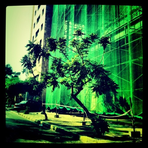 #ilovetrees but they're disappearing from my city #underconstruction #Beirut (Taken with instagram)