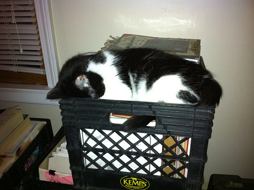 via Photo Time Capsule Breaker sleeping face-down in a milk crate full of books and papers during our move from Ypsi to Kentucky. Filed under This Time Last Year.