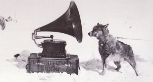 holdthisphoto:  Sled Dog Listening to Gramophone, 1910 by Herbert Ponting