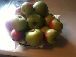 Picked my own apples from the tree and I'm going to make a fresh, from scratch apple pie!