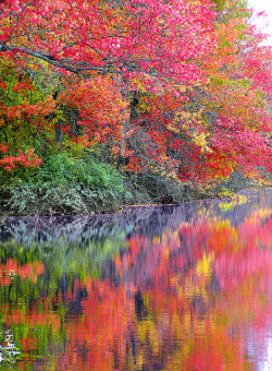 October EXPLOSION ! by RobKal on Flickr.