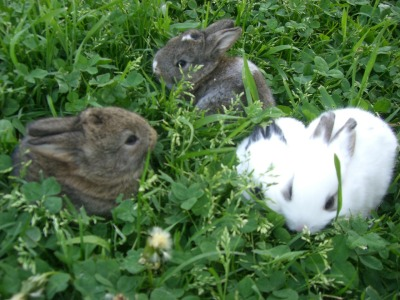 mylifeasateenagegingerr:  Before the bunnies grew up :3