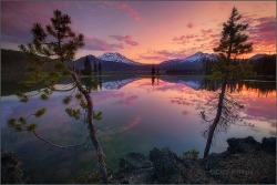 Sparks Lake Pines by Chip Phillips on Flickr.