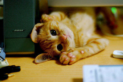 absolute-best-posts:  xoparislights: I loveses Kittehs.!! amasing Follow this blog, you will love it on your dashboard