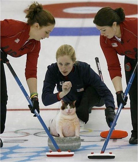 bunnyfood:  Cat Curling is still my favorite Olympic Sport