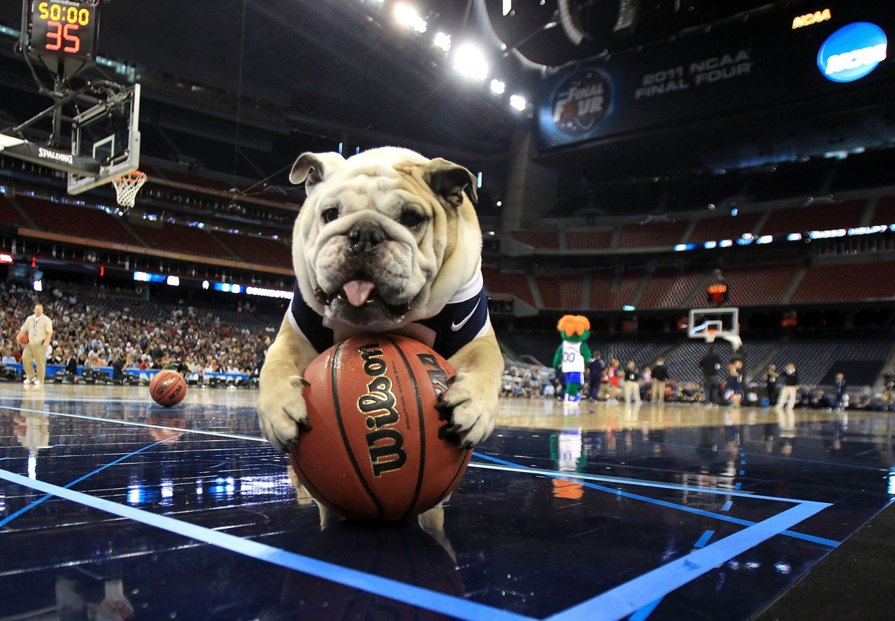nationalpostsports:  As the NCAA basketball exhibition begins, we hope Butler Bulldogs mascot Blue II will be around for many, many photo opportunities this season. (Streeter Lecka/Getty Images)