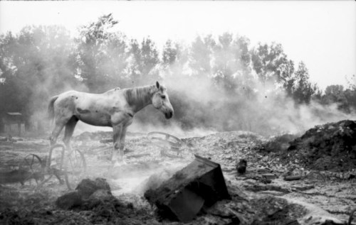 betterdead:  A lone horse wondering a recent battlefield, Poland, September 1939.