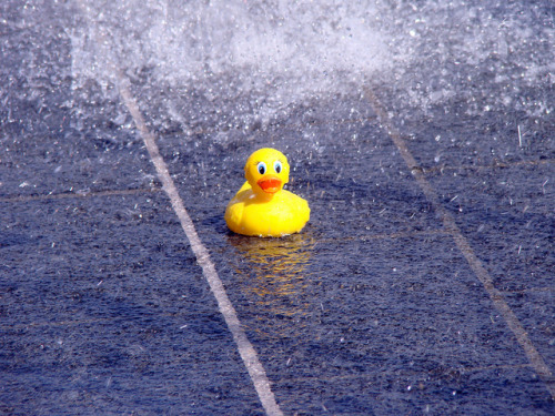Ducky in the Water by jdsmith1021 on Flickr.