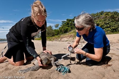 Marine turtles in Northern Australia are suffering from a debilitating virus and are also starving since many of the sea grass beds they rely on for food have been badly damaged. Stella and Jurgen Freund visited the area to photograph and blog about the situation. Click here to see their photo blog. Click here to donate to the WWF-Australia Sick Turtle Appeal.