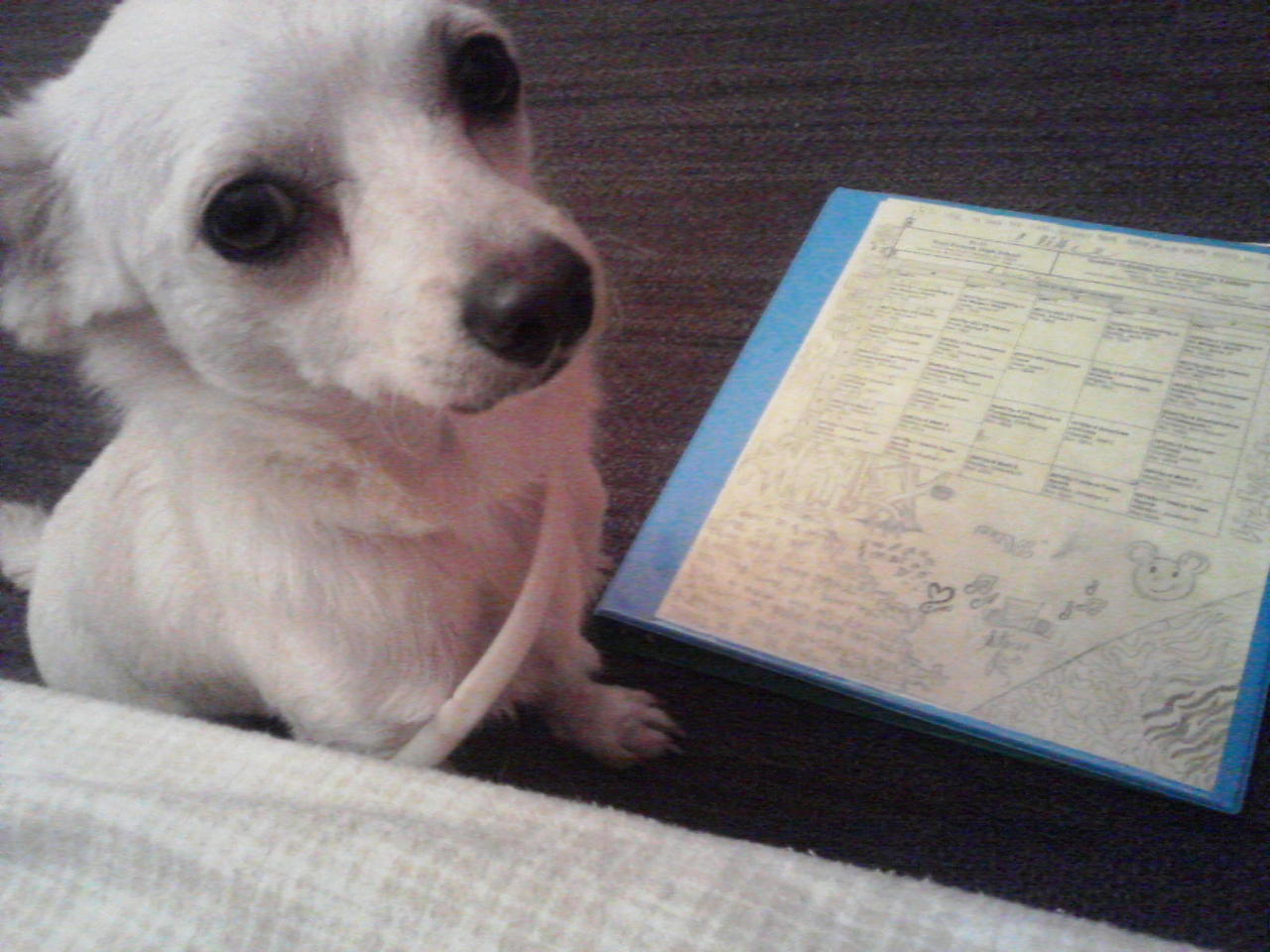 My Dog Being A Smarty. <3