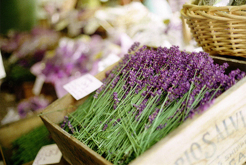 Buy me a bouquet of lavender and I'm yours. (Not even sure if the flowers in the picture are lavenders, but yeah. I like the smell of lavenders.)