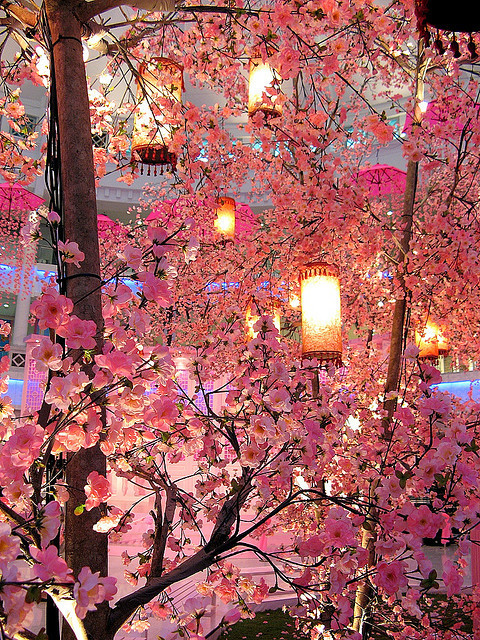 sunsurfer:  Cherry Blossom Lanterns, Malaysia  photo by smallcloud
