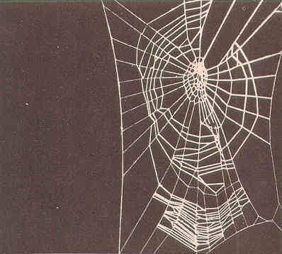 thuunder:  Spiderweb of a spider on benzedrine stimulant, the spider is too impatient to finish geometric circles of web