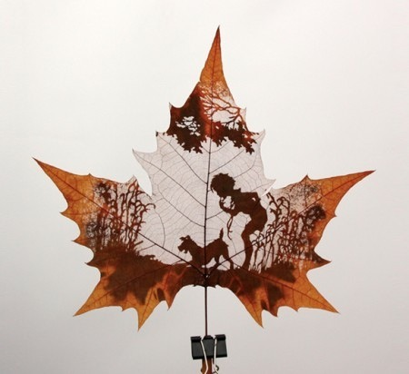 limmynem:  Cut Leaves by Nature's Art