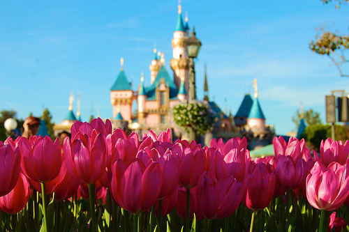 adisneyfairytale:  pinkdisneyprincess:  I'm going home tomorrow!!! YAYYYY!! Time to pack!  Lucky ^^