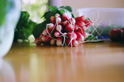 imagesmusicandwords:  French Radish Roots by cc says on Flickr.  Breakfast Radish are so spicy!