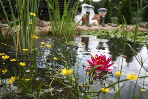 I played around a bit with my camera  at my mums garden pond in Rödeby,  Sweden recently. Man how I bent, crawled and laid down on the ground to  try and get some good photos. My leg muscles were so sore the day after! Full post and more photos at: Pond Artistico