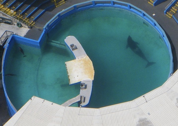 "cetaceanfriend:  Toki's Prison @ MSQ Please, learn more about Lolita (Tokitae)'s plight by going to www.hope4lolita.com I also highly reccomend watching the documentry ""Lolita: Slave to Entertainment"" which can be purchused on the slave to entertainment website or found on YouTube."