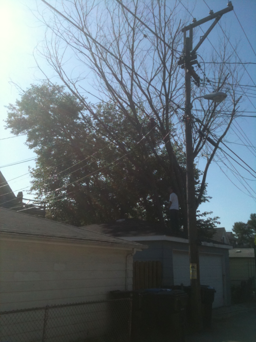 Two year old dead tree getting taken down right now, just north of Kedzie and Addison! (Right by the White Castle!) Free firewood, burnable this fall! Hurry! Free shit!