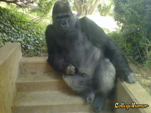 THIS IS WHY MONKEYS ARE SO FUCKING SCARY!  Gorilla Chillaxing on Staircase He's going absolutely ape sit over here.