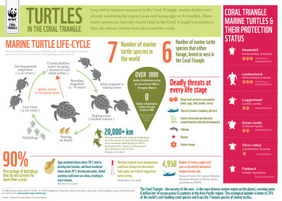 Infographic: Coral Triangle Marine Turtles  Marine turtles are to the Coral Triangle what jewels are to a crown: both indispensable and marvelous. In the case of turtles, they are also highly vulnerable. Check out this infographic to discover the simple aspects of turtles' life cycle, and the threats they face in the ocean. Learn more about marine turtles