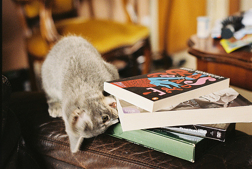 kittyramblesalot:  razorbladesalvations:  by Gillian Lowyck  my cat loves to rub her face on the various piles of books around my flat