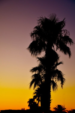 'Palms at Sunrise' Sunrise shot silhouetting a couple of palms trees with a beautiful gold to indigo gradient. Look at me now.