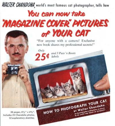 "You can now take ""MAGAZINE COVER"" PICTURES of YOUR CAT ""For anyone with a camera! Exclusive new book shares my professional secrets!"" How to Photograph Cats, 1955. Via BoingBoing"