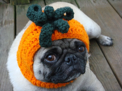 aliljazz:  Dog Hat Pumpkin Hat by Sweethoots