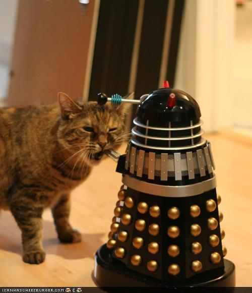 greeneyes1978:  sethharkness:  COMMENCE PETTING!   Kitty will exterminate Dalek! Meowwww! :3