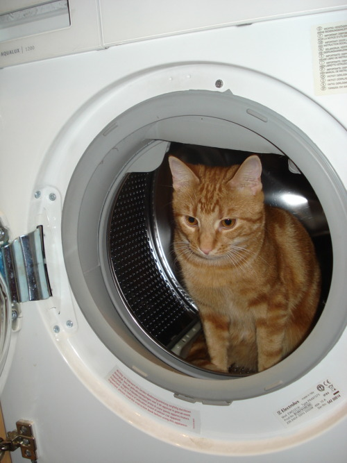 get out of there cat. you do not need washing. i don't even know if i should wash you with hot or cold water.