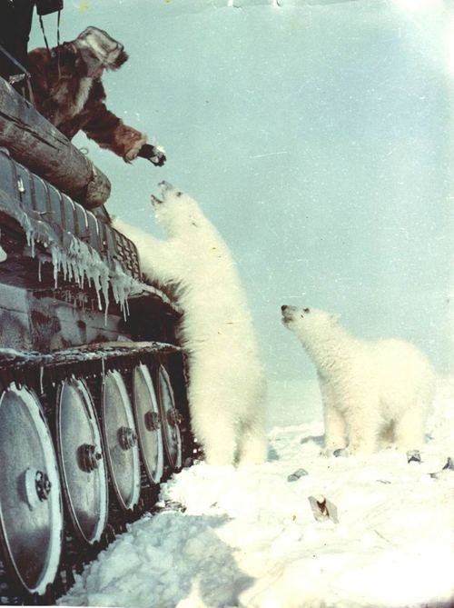 Soldiers in a tank feeding ice bears on the North Pole.