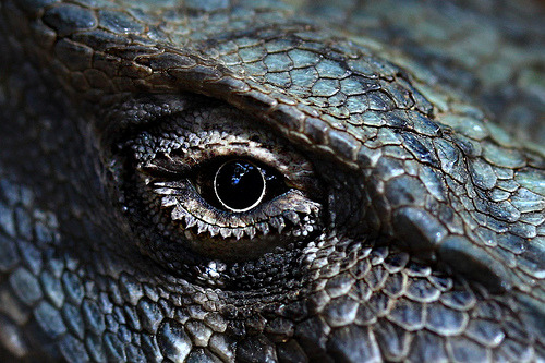 lavoisier:  dragon eye of indigo blue (by paloetic)
