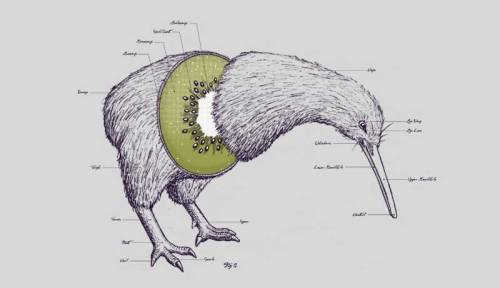urhajos:  'Kiwi Anatomy' by Will McDonald