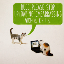 aledlewis:  What If Cats Were Using The Internet All Along? 1 of 3 one-off pieces I have contributed to the What If… group art show in Chicago. 20th August - 1 night only!