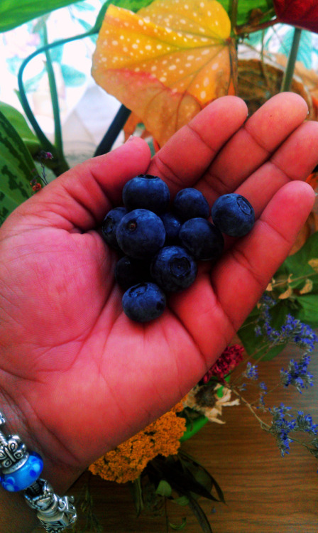 Fresh Blueberries, yum!