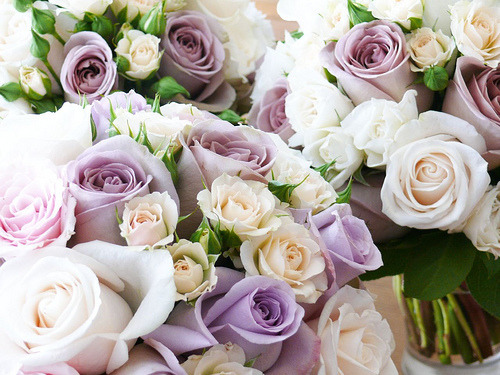 I love those dusty-purple roses - they are beautiful.