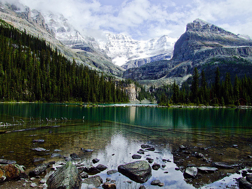 wapiti:  Lake O'Hara (by Feffef)