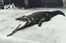 cross-stained:  Crocodile Eating Ballerina (1983) by Helmut Newton