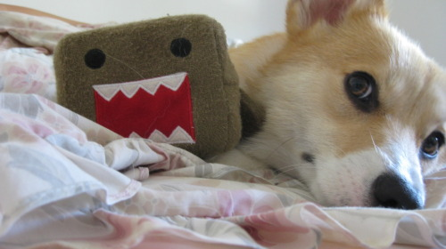 Trinket, on the other hand, respects her Domo and treats him right.