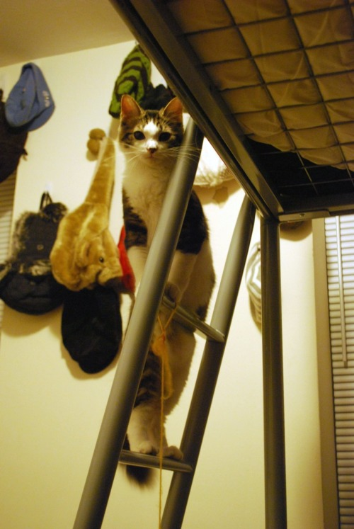 He knows how to climb a ladder.