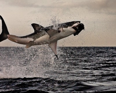 I missed shark week this year :(