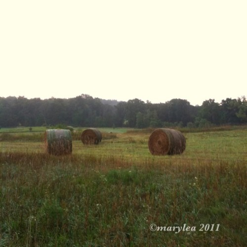 Hay bales. August 21, 2011. #nature #rural #august #morning #hay #haybales #bales (Taken with instagram)