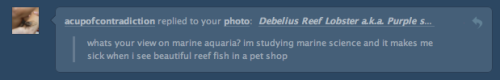 "mad-as-a-marine-biologist:  My issue with the aquarium industry is at the source. From what I've come across, most people don't think about how the pretty little fish (or coral, or anemones, or shrimp, or crabs, or lobsters, or pretty much anything) are caught. Cyanide fishing is the norm. Fishermen dive down with rudimentary dive equipment (read hose, not always with a regulator, in mouth attached to a compressor on a boat) and a squeeze bottle filled with sodium cyanide.  When they see the fish on order (and let's face it, by now it's more than likely to be threatened), they squeeze the NaCl NaCN (Sillly Sam— and everyone thinks she is a real scientist! :D) around the area. The mixture stuns the fish, slowing it down so it can be caught without damaging it. Unfortunately the toxin is deadly to invertebrates and any hard or soft coral in the area are done for, as well as other species that are food and habitat sources for reef inhabitants. The fish is usually shipped off to a factory where it is packaged to be flown to whichever country the order came from. The main powers of the West (USA, UK) and various countries in SE Asia are the main customers. More often than not the fish are given various drugs and antibiotics so they are ""clean"" for the aquarium, but this just shortens their life span exasperating the demand on the source reef. The danger is also inherent for the fishermen, from impoverished nations that are trying to make enough for their families. I've seen the struggle here in Philippines, the uncertainty of the next meal, the children's future, health bills etc. And in nations, like this one, the sea is pretty much the only resource available. But in the efforts to get these fish, they are putting their lives at risk. Almost none of them have any sort of formal dive training. No precautionary measures are taken to prevent decompression sickness that is thought to be on of the worst pains around. It can paralyze and very frequently kill. Sadly it is easily prevented with the right training, equipment, and attitude. Imagine what happens if the compressor on the boat fails, if the hose slips out his mouth, if anything goes wrong. If the fisherman doesn't die he left unable to work, and unable to earn for his family. It's dire straits any way you cut it. And it's all to meet a frivolous demand. With no demand, the supply chain evolves towards something else, something more sustainable for both man and nature. To quote a catchphrase from the anti-shark fin movement, applicable pretty much everywhere: When the demand stops, the killing will too. As the consumer, you actually have all the power. Use it. And if you must have fish in your tank, look for reputable suppliers, that don't drug the fish, and train their fishermen suppliers. They are out there."