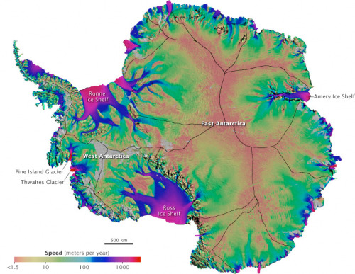 "cwnl:   Rivers of Melting Ice Mapped in Antarctica The first-ever map of how Antarctica's ice is moving across that continent has been created by researchers at the University of California, Irvine. The map, along with an associated animation developed by NASA, reveals that ice is flowing fastest in coastal ice shelves and their tributaries, shown in this illustration in bright purple and blue. Though it's ice that's moving, not water, ""you can imagine it like a river system,"" says Bernd Scheuchl, one of the map's creators. The fastest ice flows out to sea at a rate of a few kilometers a year. Pine Island and Thwaites Glaciers on the west coast are the most active. The team was surprised by how far inland they found fast-moving ice, Scheuchl says. So, if Antarctica loses a great deal of its coastal ice to climate change in the coming decades, large quantities of interior ice could follow. ""That's critical knowledge for predicting future sea level rise,"" NASA polar scientist Thomas Wagner said in a prepared statement. To create this view of Antarctic ice flow, the UC Irvine researchers relied on data from satellites operated by Canada, Japan and the European Space Agency. Flow was tracked from 2007 to 2009 during a period of intense scientific monitoring of Earth's poles that researchers all over the world had agreed to do. A report on the map was published online August 18 in Science.  Journal Reference: Science"