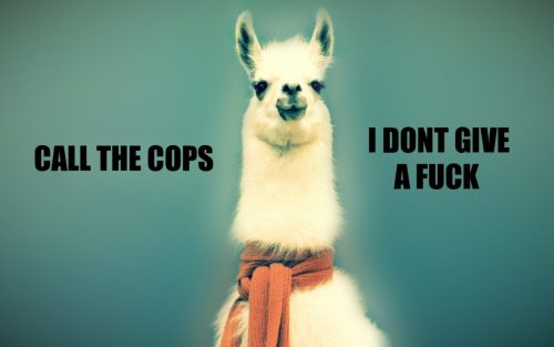 king-of-kfc:  sassy rebel llamas