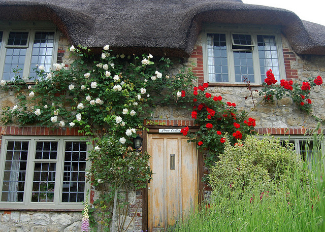 enchantedengland:     This one is Pine Cottage. I do love a Cottage with a name. And this town of Amberley is apparently straight out of a fairytale or something. (West Sussex, England. by JR P on beautyineverything.com)